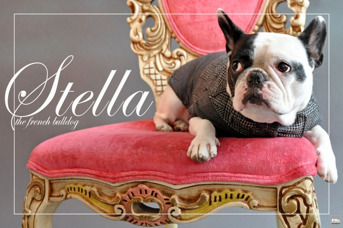 Stella Animal Magnetism 1