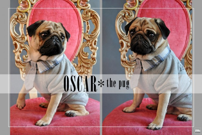Oscar Animal Magnetism 1