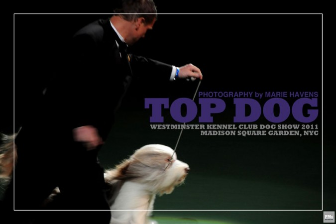 Top Dog_1
