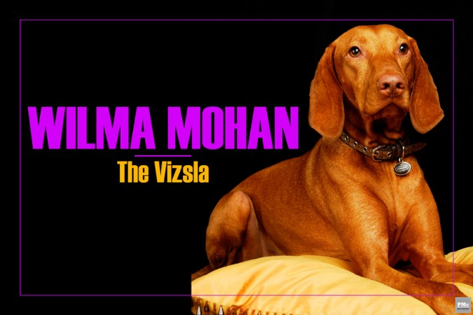 WILMA-MOHAN