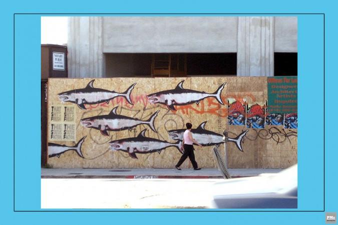 6 Sharktoof - Shark Week