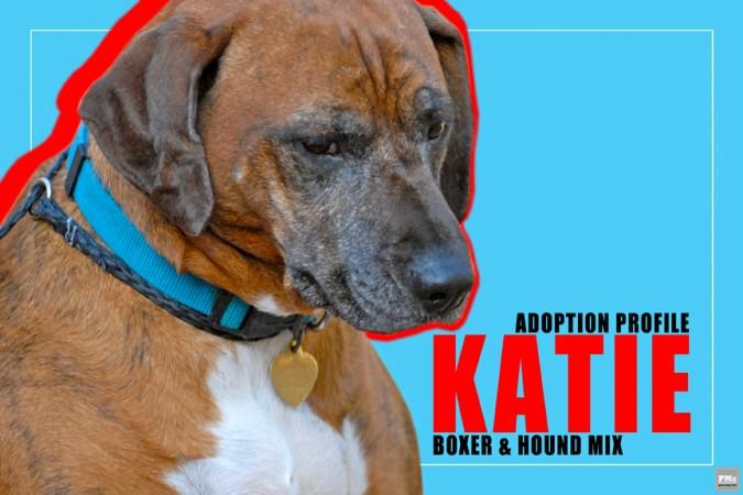 Katie-Boxer-Hound