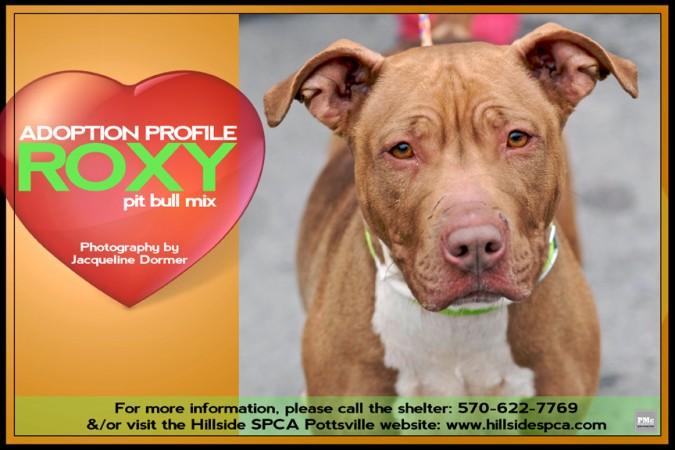 Roxy-Adoption-Profile